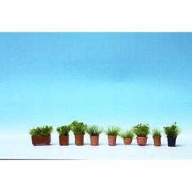 Noch 14032 Gräsväxter i blomkrukor, 9 st