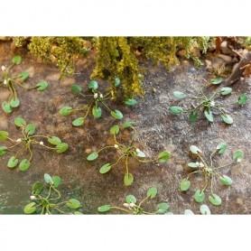 Faller 181260 Vattenliljor, 12 st, höjd cirka 5 mm