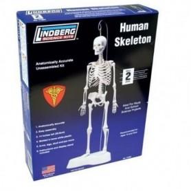 Lindberg 71304 Human Skeleton
