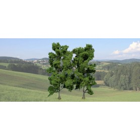Heki 1912 Bokträd, 2 st, 18 cm