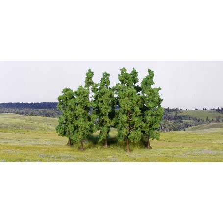 Heki 1925 Bokträd, 10 st, 11-13 cm