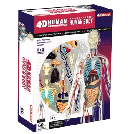 4DMaster 26070 Transparent Human Body, 13 inches