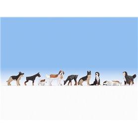Hundar 9 st