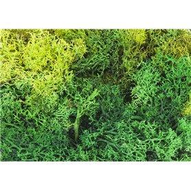 Faller 170729 Mossa, grön, i påse, 50 gram
