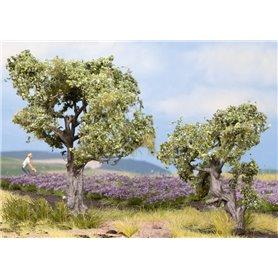 Noch 21995 Olivträd, 2 st, 6 och 9 cm höga