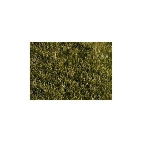 Noch 07106 Gräs, mörkgrön, extra lång, 50 gram påse